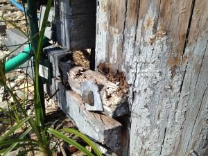 termites organize