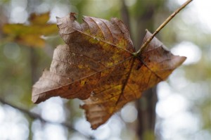 """Lesson from fall. In other words, trees tell their leaves, """"time for you to get off of me!"""""""