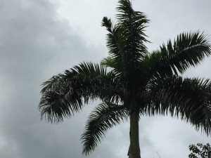 Palm Tree. Failing to make space for growth to occur.