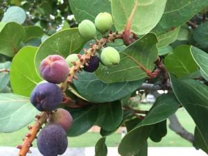 Bearing Fruit on a Tree