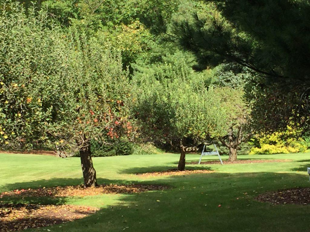 Fall, trees, organizing
