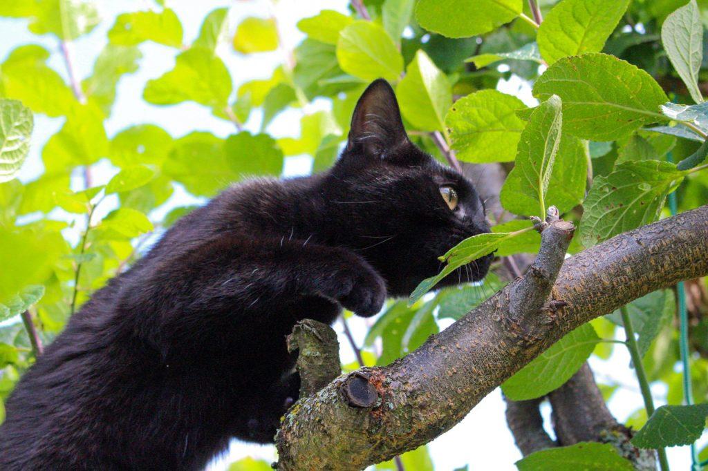 Cat sneaking in