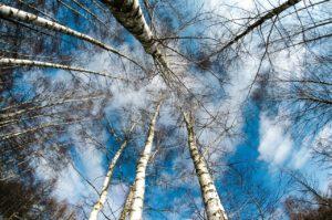 Winter nature scene to relax