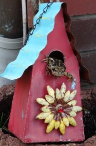 """Frog in a birdhouse. objects who are """"living"""" in our space without our permission or knowledge."""