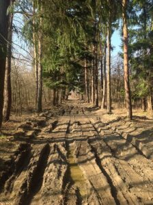 dirty road with ruts