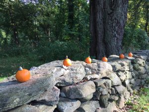 pumpkins lined up on a wall to make you think of fall organizing projects