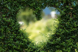 heart in the middle of a shrubbery